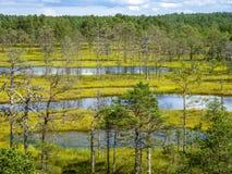 在塔林附近的湖风景 免版税库存图片