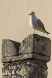 在塔的海鸥 图库摄影