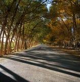 在塔里木盆地的绿洲 免版税图库摄影