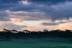 在塞伦盖蒂平原的晚上天空 免版税库存照片