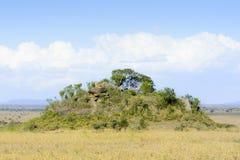 在塞伦盖蒂平原的Koppie 库存照片