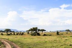 在塞伦盖蒂的多云风景 坦桑尼亚,非洲 图库摄影