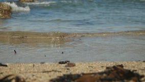 在塞浦路斯沙滩的惊人的蓝色起波纹的水飞溅在宏观看法有迷离岩石背景 股票录像