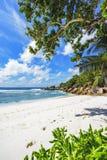 在塞舌尔群岛的天堂海滩, anse椰树, la digue 19 库存图片
