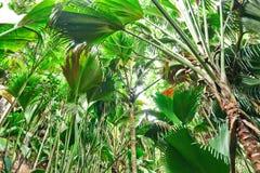 在塞舌尔群岛的热带雨林 库存照片