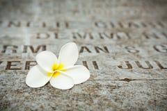 在墓碑的白花在老公墓 库存照片