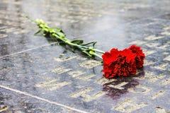 在墓碑的红色康乃馨 库存照片