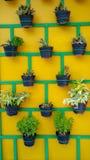 在墙壁上整洁地安排的植物罐 免版税库存图片