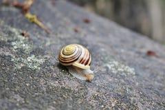 在墙壁上的一只蜗牛 免版税图库摄影