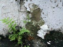 在墙壁上的一棵小的蕨植物 免版税库存照片