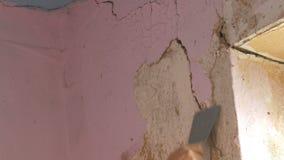 在墙壁上的剥落桃红色墙纸,家庭修理 剥与特别小铲的人老墙纸 股票视频