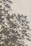 在墙壁上的叶子阴影 库存照片