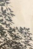 在墙壁上的叶子阴影 库存图片