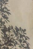 在墙壁上的叶子阴影 图库摄影