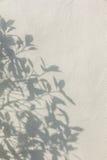 在墙壁上的叶子阴影 免版税库存图片