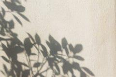 在墙壁上的叶子阴影 免版税库存照片