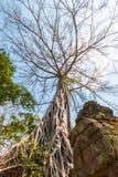 在墙壁上的大树 免版税图库摄影