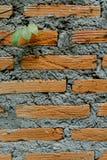 在墙壁上的常春藤叶子 免版税库存图片