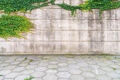 在墙壁上的常春藤有水泥地板的 免版税库存照片
