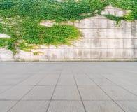 在墙壁上的常春藤有水泥地板的 免版税图库摄影