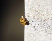 在墙壁上的昆虫 库存照片