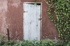 在墙壁上的木门和常春藤叶子 免版税库存图片