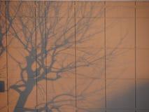 在墙壁上的树阴影在早晨光 免版税库存图片