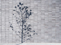 在墙壁上的树阴影铺磁砖背景建筑学细节 库存照片