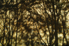 在墙壁上的树阴影 免版税库存图片