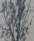 在墙壁上的树阴影 免版税库存照片