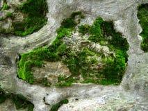 在墙壁上的森林 库存图片