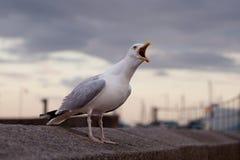 在墙壁上的海鸥 库存图片