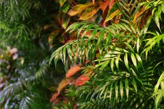 在墙壁上的热带植物 库存照片