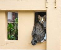 在墙壁上的猫 免版税库存照片