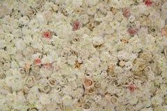 在墙壁上的玫瑰 免版税库存图片