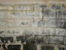 在墙壁上的真菌 库存图片