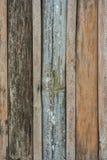 在墙壁上的竹子 免版税库存照片