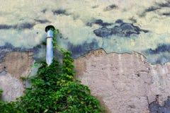 在墙壁上的管子有野生植物的 免版税库存照片