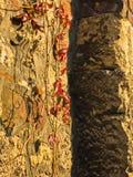 在墙壁上的红色秋叶在Kalemegdan堡垒,贝尔格莱德里面 库存照片