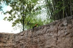 在墙壁上的绿色和红色鹦鹉 库存图片