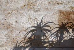 在墙壁上的芦荟阴影 库存照片