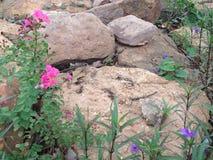 在墙壁上的花在庭院里 图库摄影