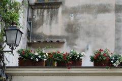 在墙壁上的花在波西塔诺 免版税图库摄影