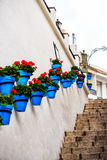 在墙壁上的蓝色花盆 库存照片