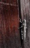 在墙壁上的蚂蚱 库存照片