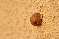 在墙壁上的蜗牛 免版税库存图片