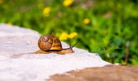 在墙壁上的蜗牛 免版税图库摄影
