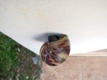 在墙壁上的蜗牛 库存照片