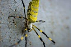 在墙壁上的蜘蛛 免版税库存图片