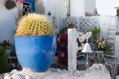 在墙壁上的装饰仙人掌庭院在海附近 库存图片